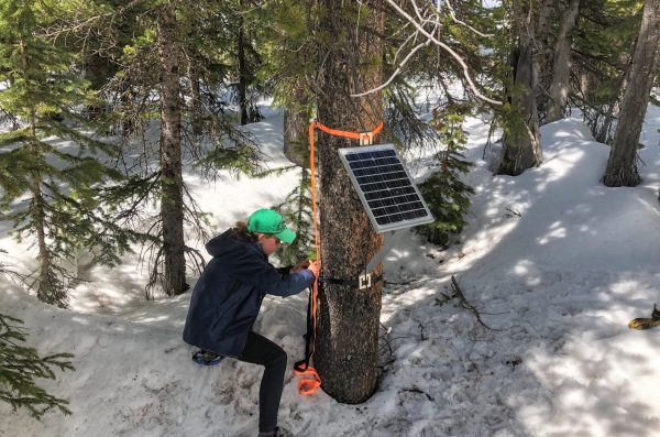Student in outdoor winter forest setting.  She is working to setup an instrument on a tree.