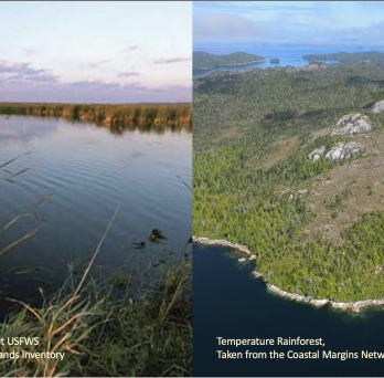 On the left, wetland featuring a pond and a variety of grasses.  On the right an aerial view of a temperate rainforest near an ocean